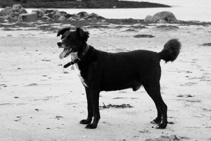 Oakley on Ganavan Beach, Oban, Scotland 2016