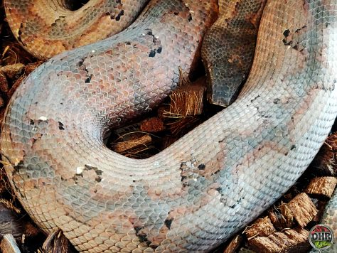 We are getting close to the point in the season where we start pairing our boas for breeding.