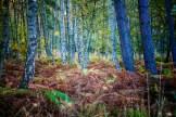 Im Osterwald auf Zingst