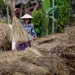 Cambodia Photography