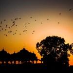 Freedom to fly by Shilpakala BA