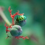 Green Jewel by Sreedevi