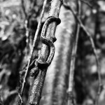 Malabar Pit Viper by Anand Menon
