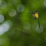 Spider by Vinodh Ve