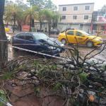 Tormenta en Córdoba: cayeron ramas de un árbol e hirieron a un conductor