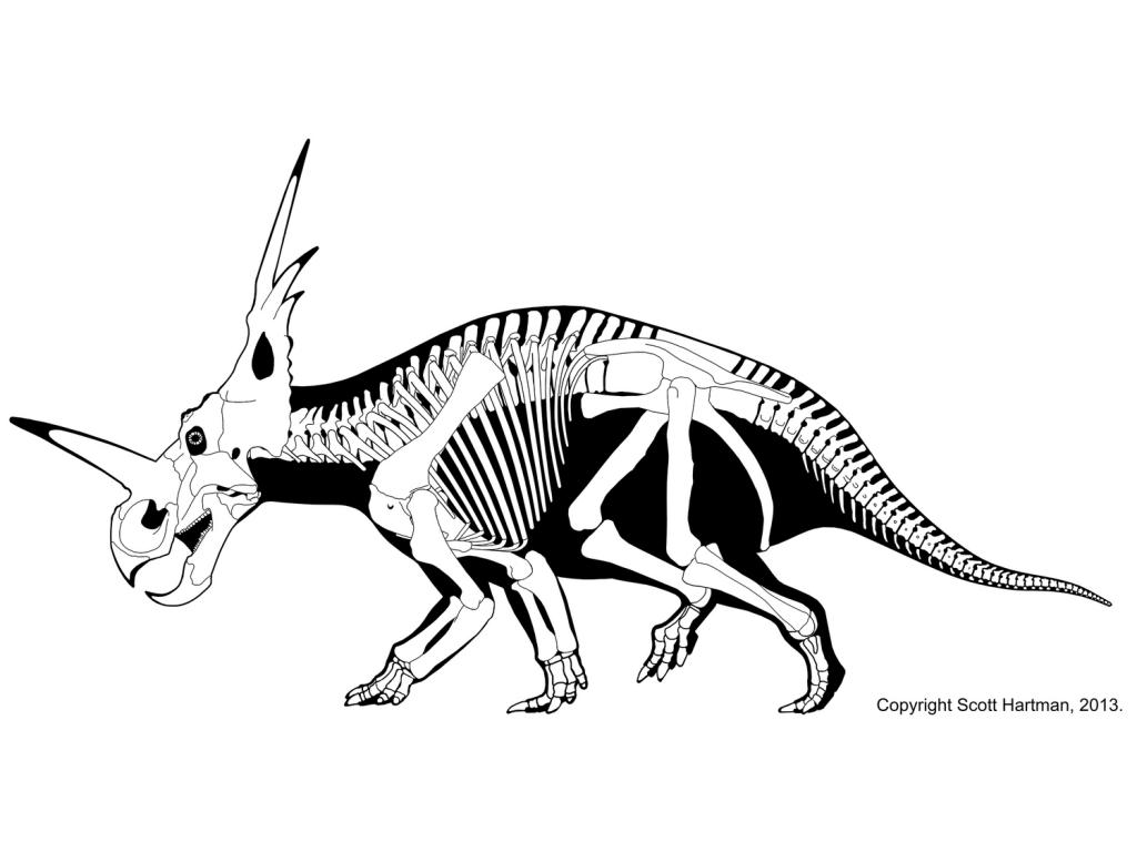 Styracosaurus albertensis: The Cretaceous Rhinoceros