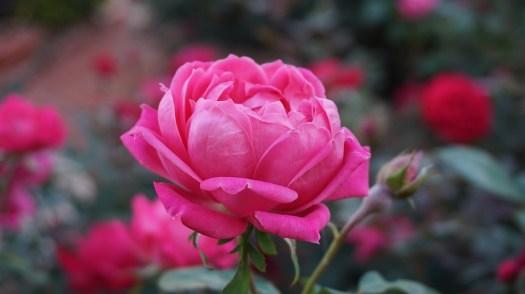 Wenn Du eine Blume liebst