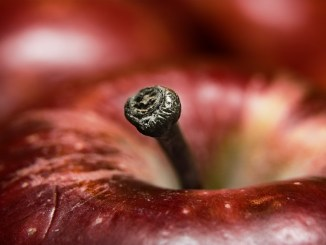 Esst Äpfel gegen Putin, Foto: Schuyler, CC-BY-2.5