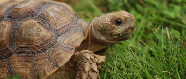 Schildkröten Malvorlagen Gratis