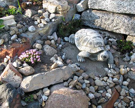 Im Steinbeet  Das wilde Gartenblog