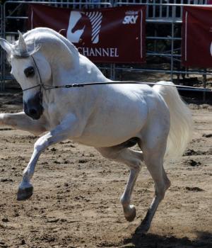 L'arte del cavallo