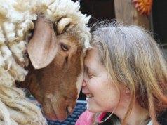 Copertina Animal Communication