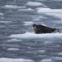 Livello del ghiaccio marino più basso di sempre