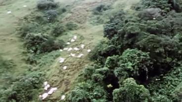 Tote Schafe