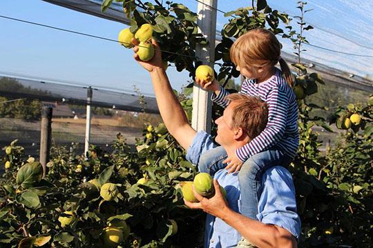 Bauer und Tochter beim Apfelpflücken