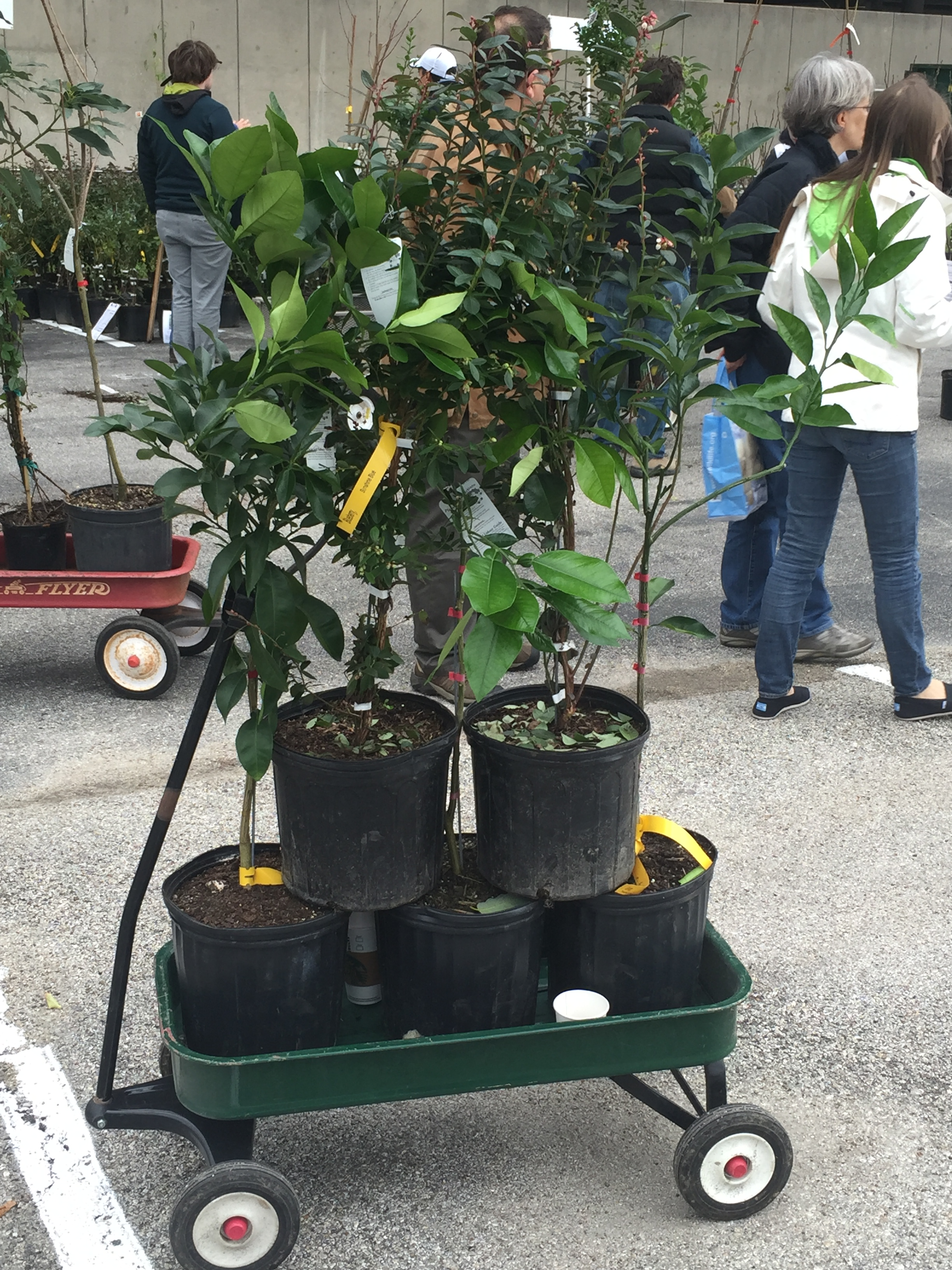 Urban Harvest Fruit Tree Sale