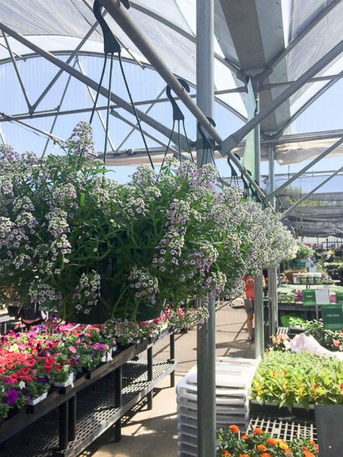 hanging flowered plants in Cornelius Nursery, Houston, TX