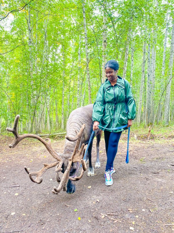 Jazzmine holding reigns of adult reindeer standing in wooded area.