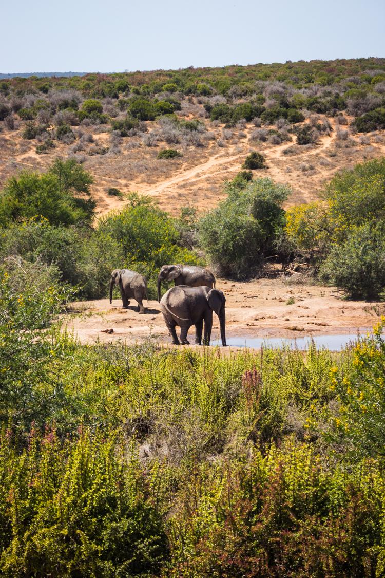 Addo Elephant Park (18 von 307)