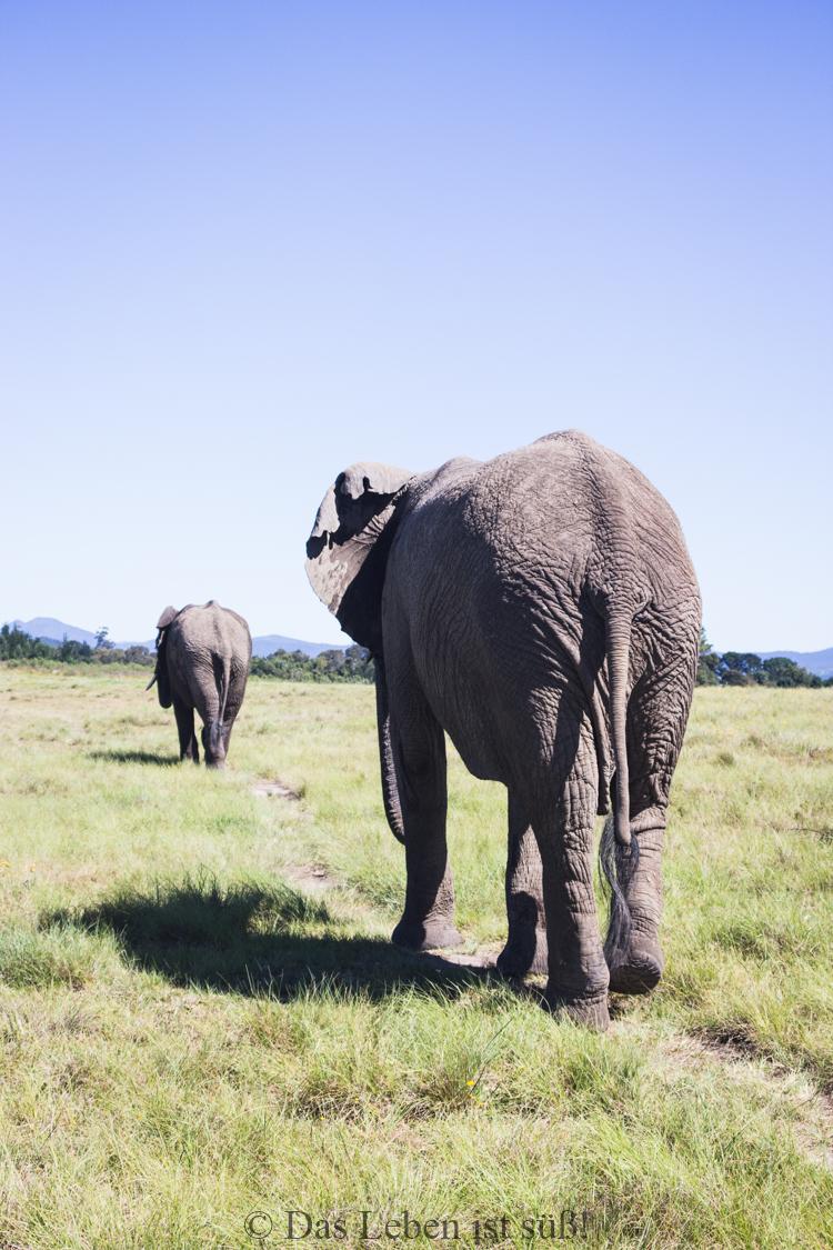 Knysna Elephant Park (30 von 93)