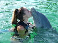 Schwimmen mit den Delfinen - Das Reise Projekt