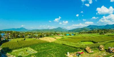 keuntungan budiaya padi organik