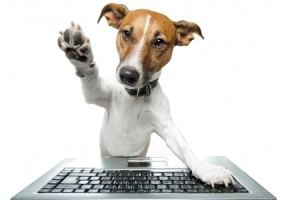 dog working on computer