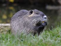 The Uncommon relation Between Beavers, Permafrost and Weather Change