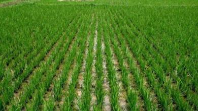 Photo of FG to inject over N600bn into agriculture,  minister says