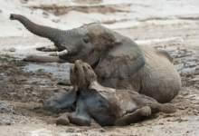 Photo of Namibia auctioning 170 elephants over drought