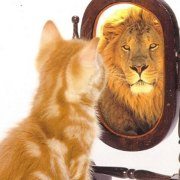 Cat with lion reflection