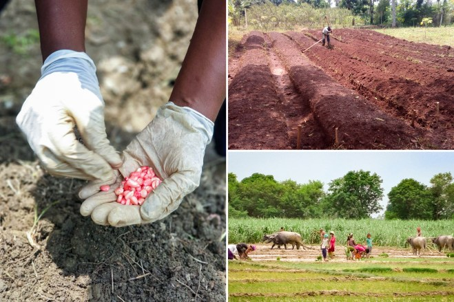 Images of agricultural initiatives of the Bahá'í community in (clockwise from left) Colombia, Uganda, and Nepal to strengthen local agriculture.