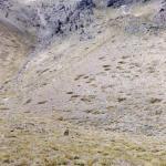 Polleras159