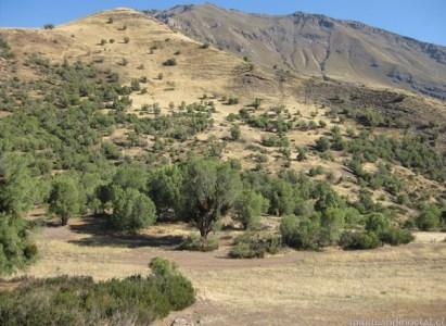 Ascenso Cerro El Durazno – Domingo 14 Diciembre
