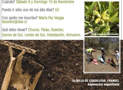 Invitación Plantación de Frangeles en Lo Valdés – 9 y 10 de Noviembre