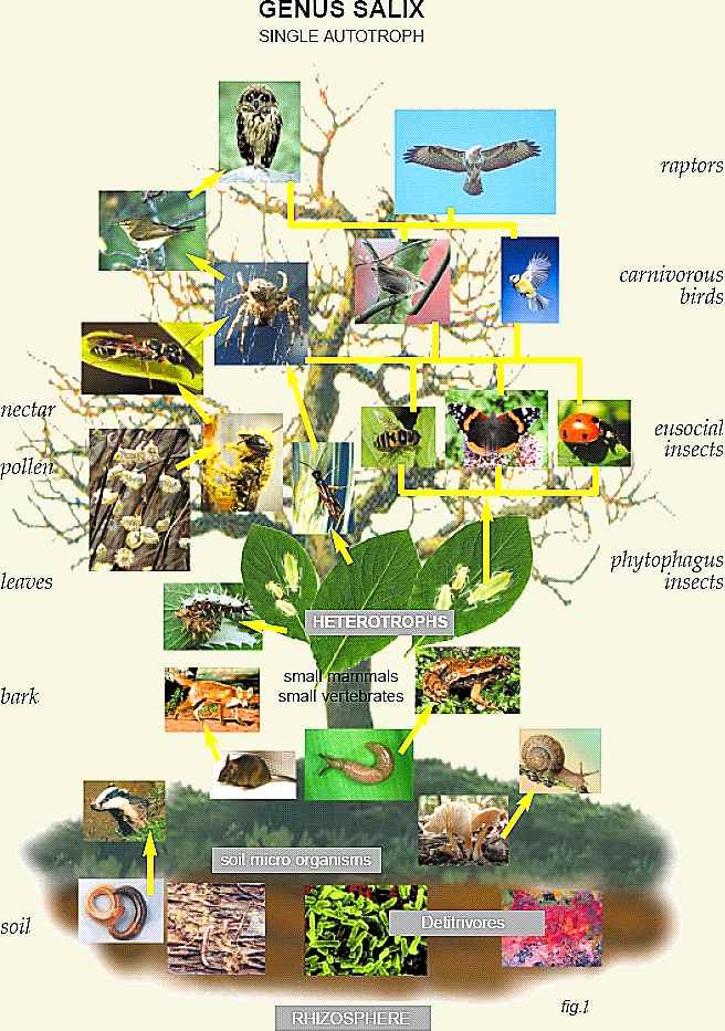 diagram of a tropical forest noco battery isolator wiring juliayunwonder rainforest food chain