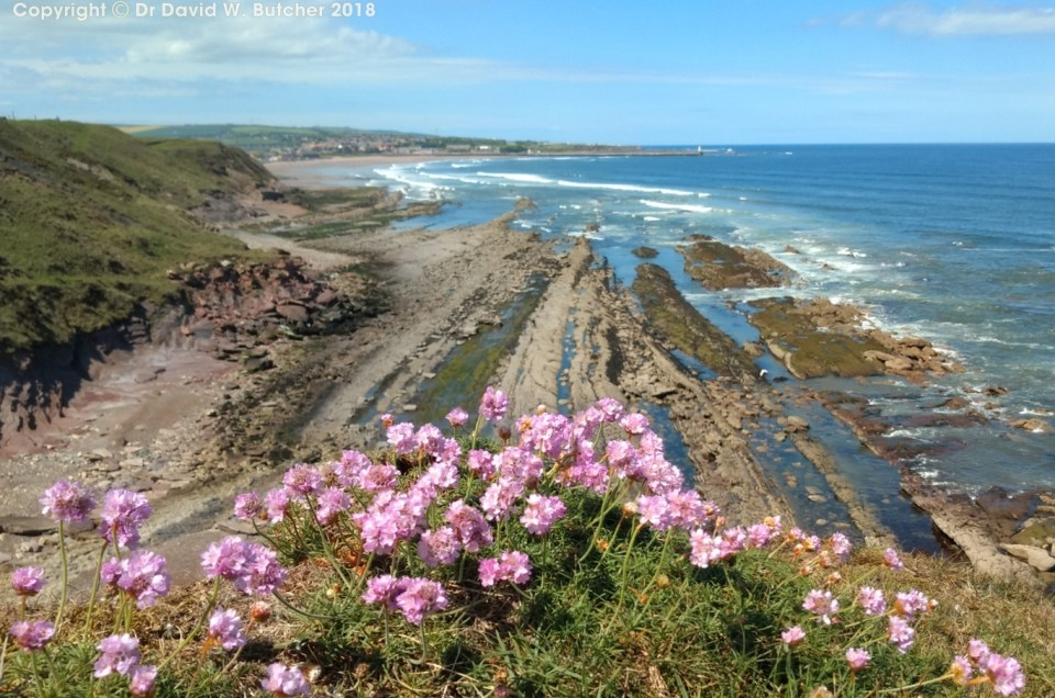 Northumberland Coast Photos Day 6