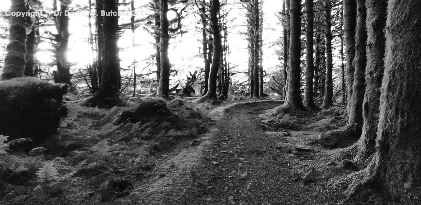 Dunslair Heights trees near Black Law above Peebles