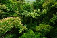 Rainforest Canopy   www.pixshark.com - Images Galleries ...