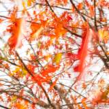 Fall - Dave Simpson Photography