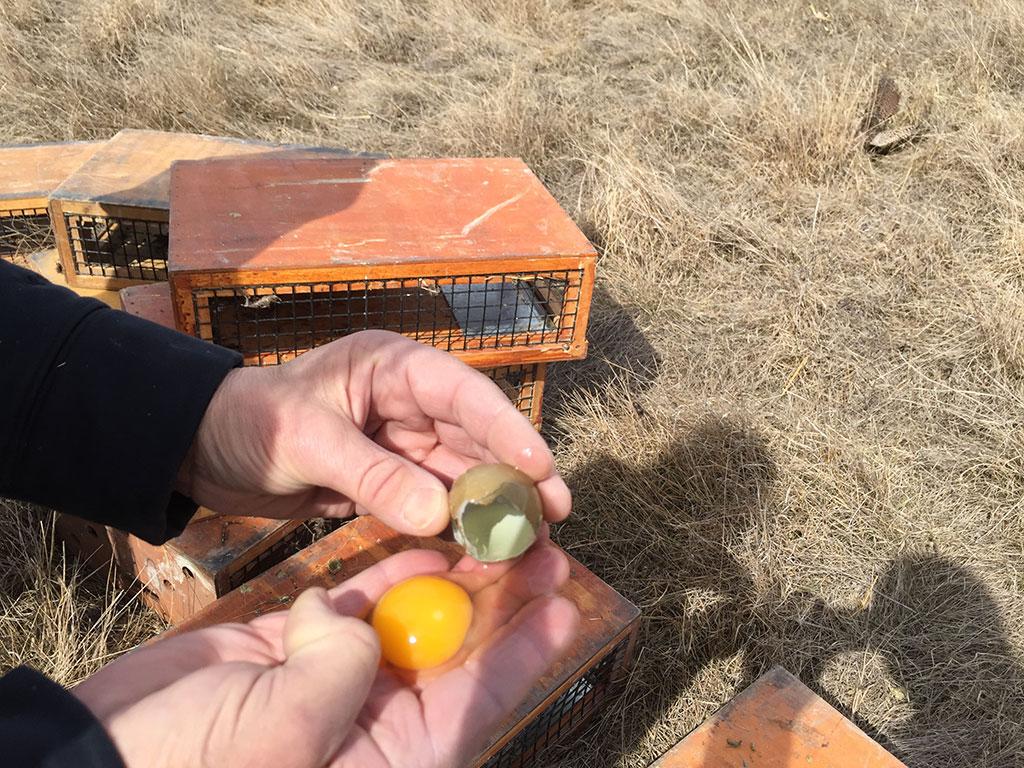 Dave Spaid Pheasant Hunting Trips