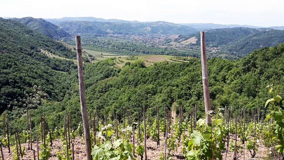 crozes rouss vines