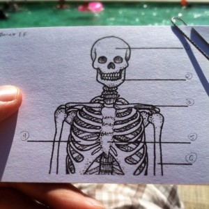 Takin a few minutes in the sun to study for the yoga teacher final. (PS: Cranium, Mandible, Clavicle, Ribs, Sternum, Humerus!)