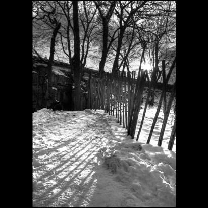 Woodland Shadows(Lumsdale)