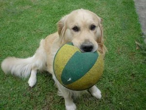 Jack-Holding-Ball