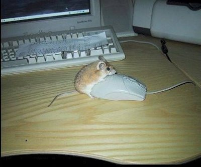 Where mice come from