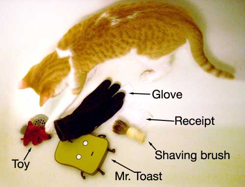 More things my cat has dragged in the bathtub