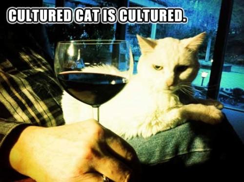 CULTURED CAT IS CULTURED