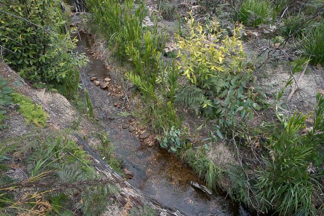 Side creek - clear water
