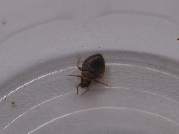 Healthy Lifestyle - When We Last Met, Bedbug?
